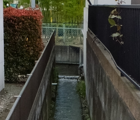 座間市四ツ谷の用水路