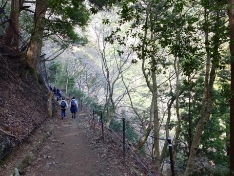 大山のハイキング道