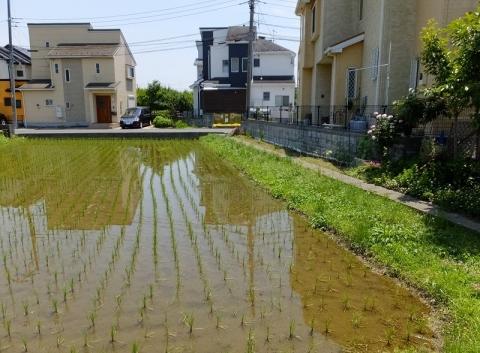 三田用水支線用水路・厚木市妻田東3