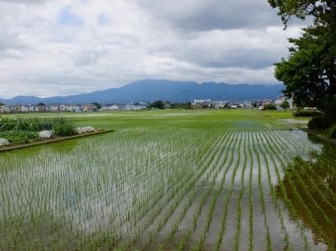 神奈川県座間市四ッ谷の田んぼ