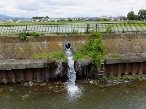 座間市四ッ谷の田んぼから鳩川へ排水の様子