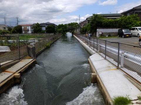 堰の橋より相模川左岸幹線用水路上流を望む