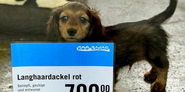 Zoo Zajac 犬 価格