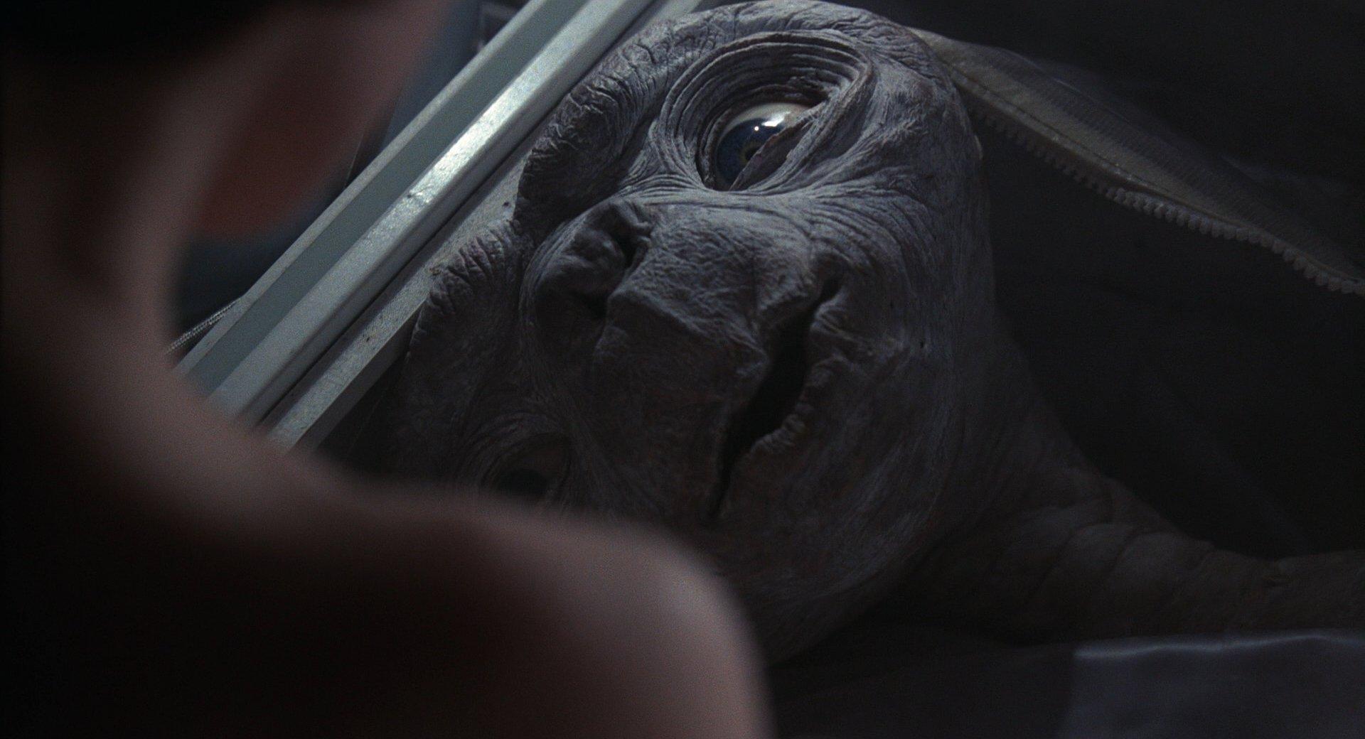 『E.T.』オウチカエル