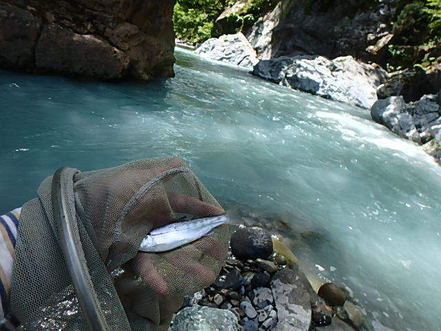 唯一の小滝川9