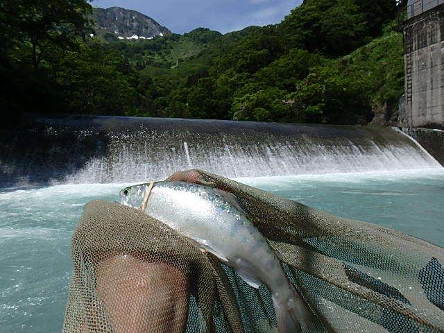唯一の小滝川15