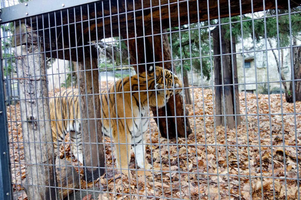 旭山動物園11