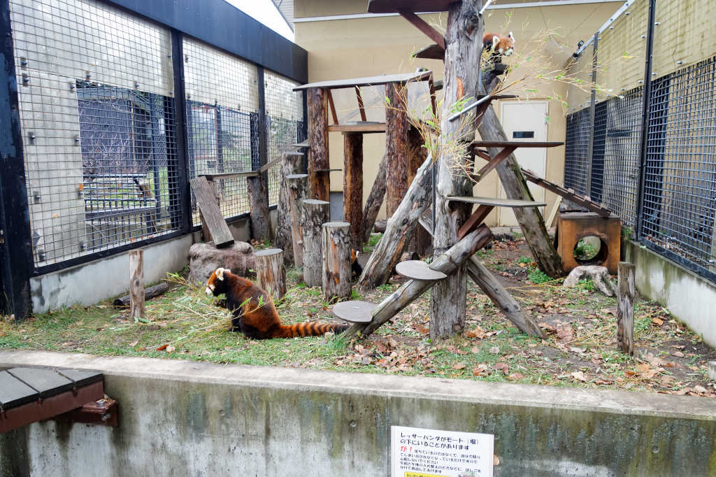 旭山動物園15
