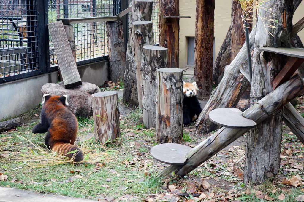 旭山動物園16