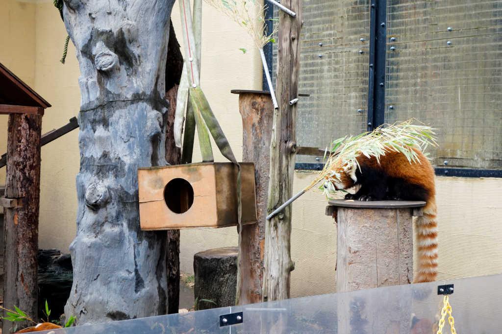 旭山動物園17