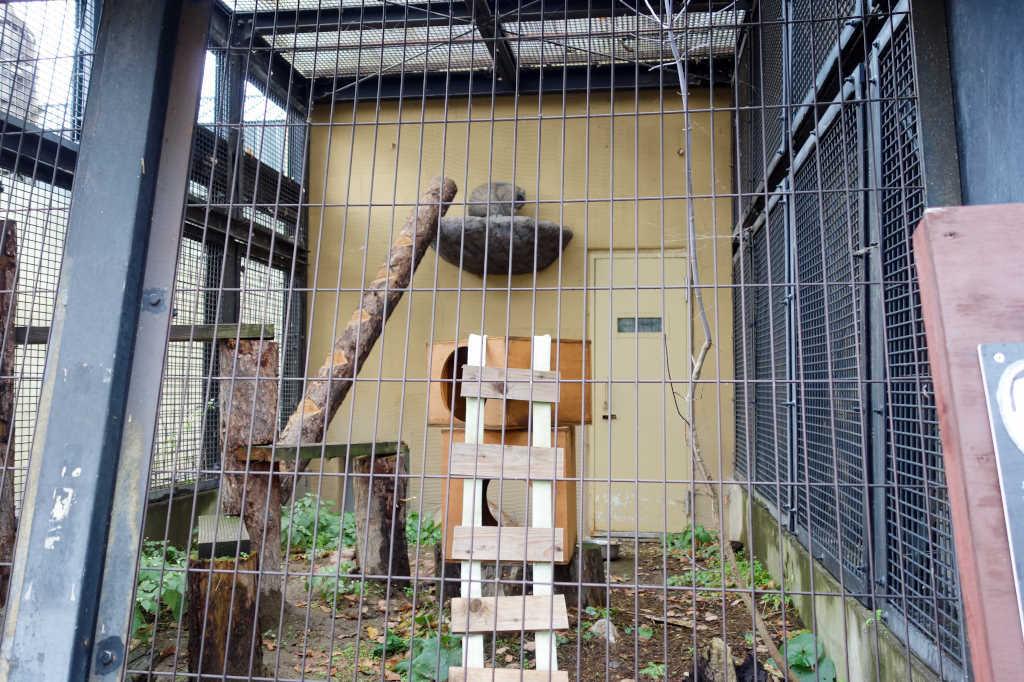 旭山動物園18