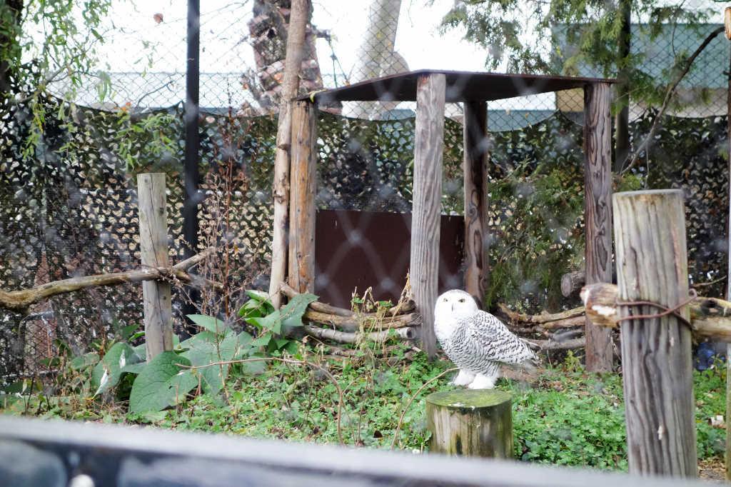 旭山動物園20