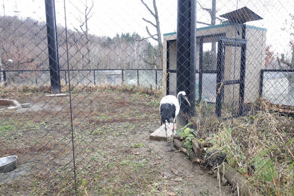 旭山動物園26