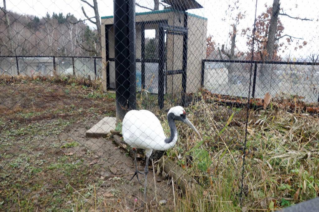 旭山動物園27