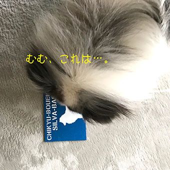 IMG_0170 (1)