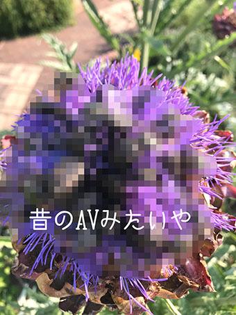 IMG_0977 (1)