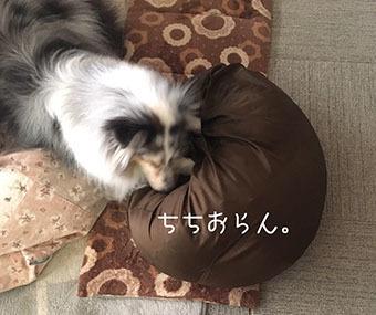 IMG_8206.jpg