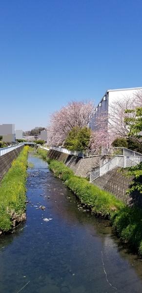 2019-4桜