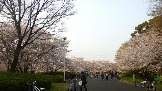 大泉緑地の桜 2019 ソメイヨシノ(桜広場の入口近くで撮影)