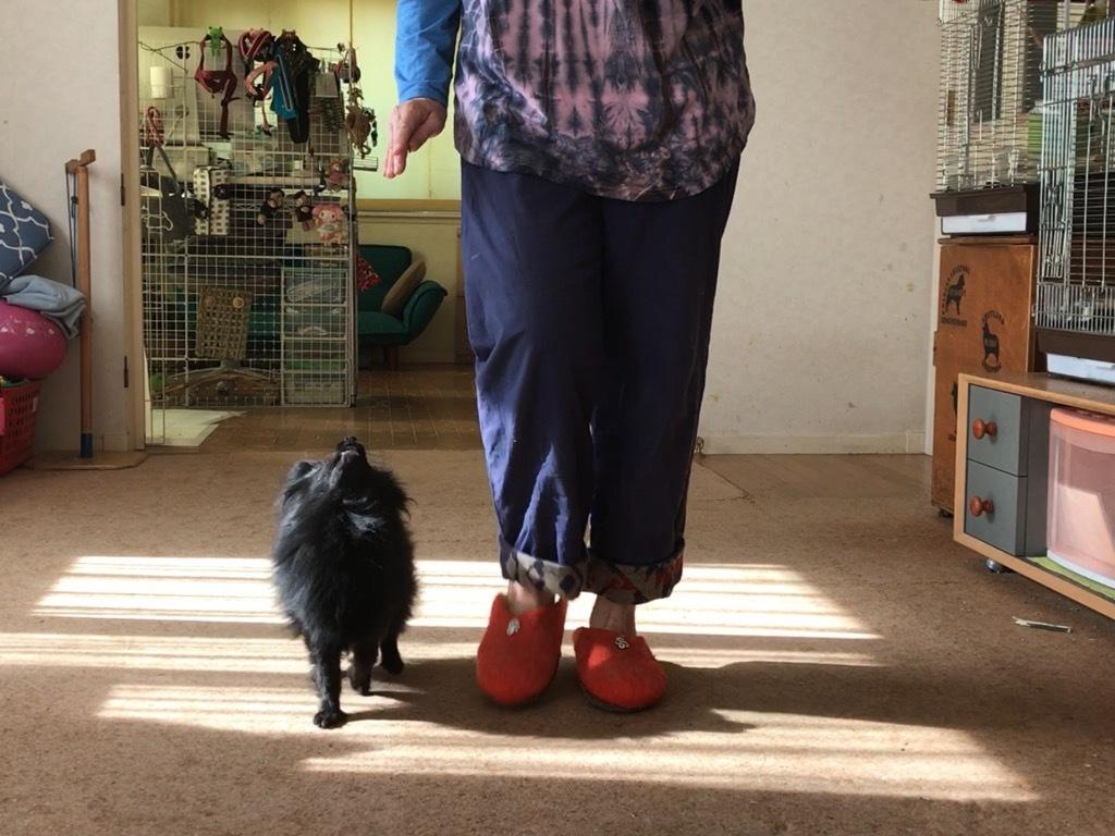 小型犬のためのビジュアルルアーハンドの教え方