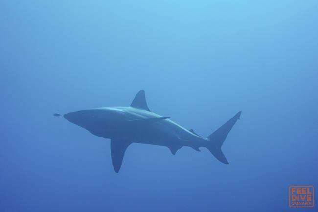 サメカメサメカメ