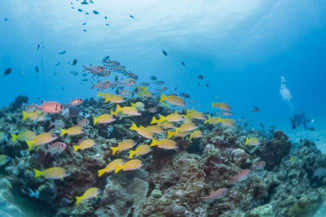 GWの水納島はコレ推しで