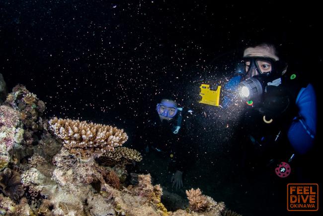 サンゴの産卵 2019