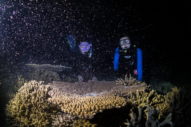 2019 サンゴの産卵 動画