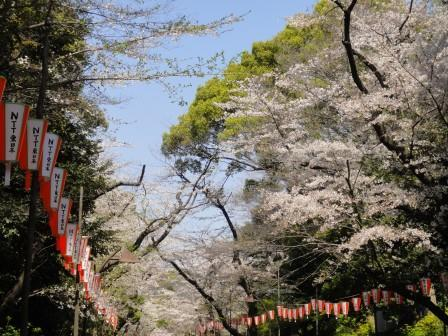 桜14-9