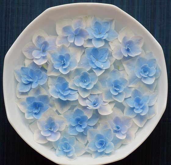 190615ガクアジサイ装飾花