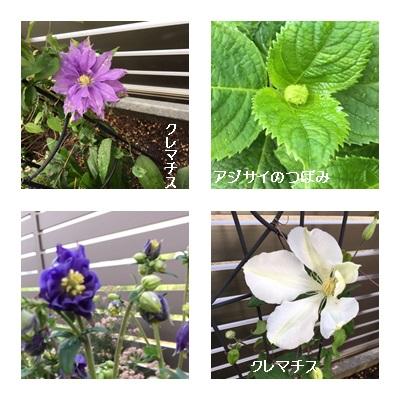 2019 4がつ 庭の花1