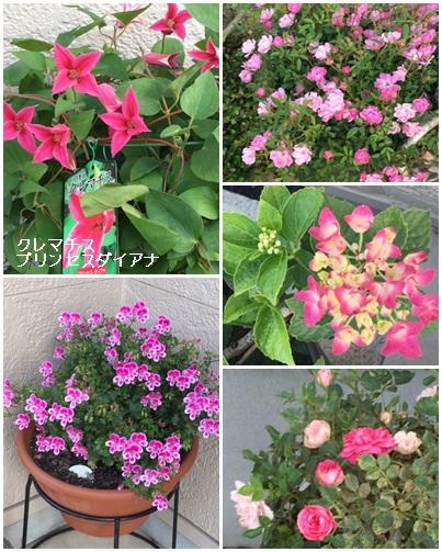 2019 5がつ 庭の花2