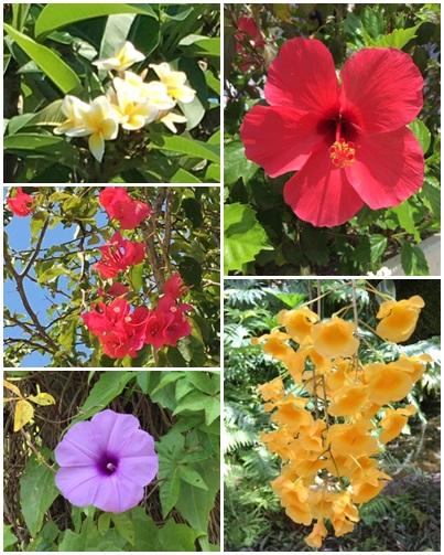 2019 5がつ 庭の花3