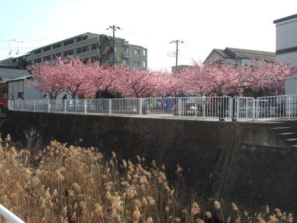 平戸永谷川桜神社前03