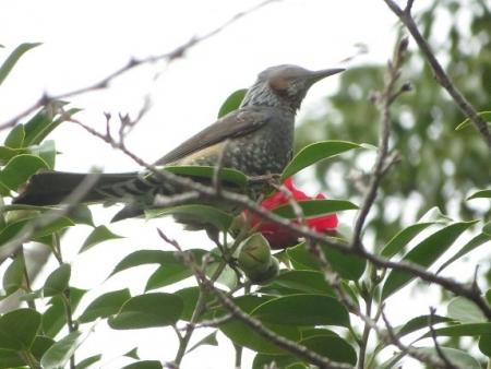 公園野鳥達 2019-02-28 057