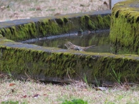 公園野鳥達 2019-02-28 030