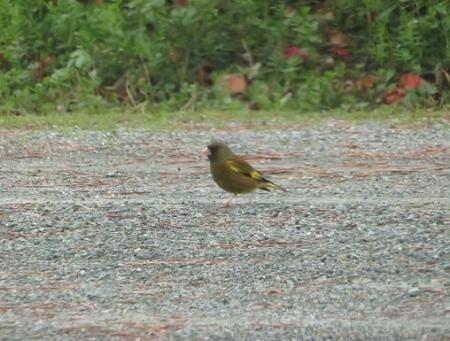 公園野鳥達 2019-02-28 070