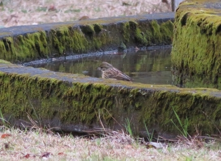 公園野鳥達 2019-02-28 036