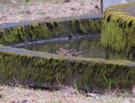 公園野鳥達 2019-02-28 034