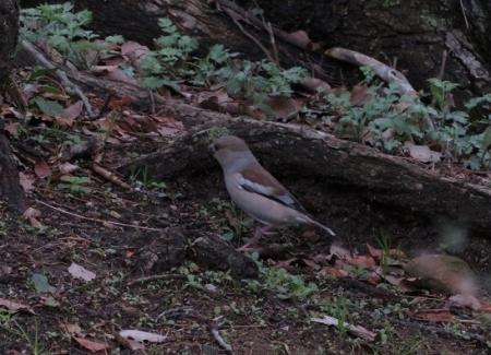 公園野鳥達 2019-02-28 016