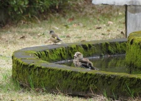 公園野鳥達 2019-02-28 048