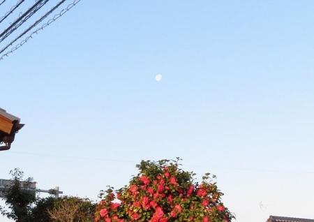 椿とお月様 2019-03-24 001