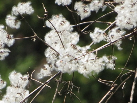 つばきがはな林道 2019-03-17 031
