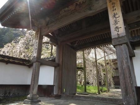 光明寺のしだれ桜 2019-03-29 006