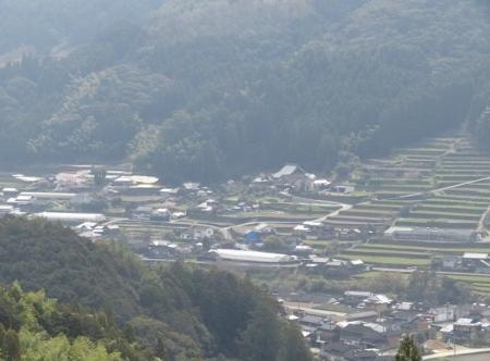 光明寺のしだれ桜 2019-03-29 085