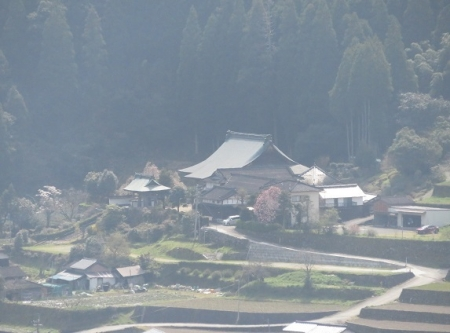 光明寺のしだれ桜 2019-03-29 087