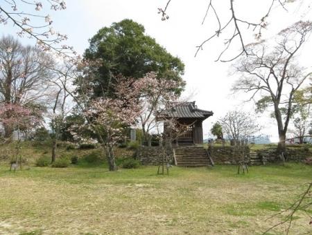 光明寺のしだれ桜 2019-03-29 138