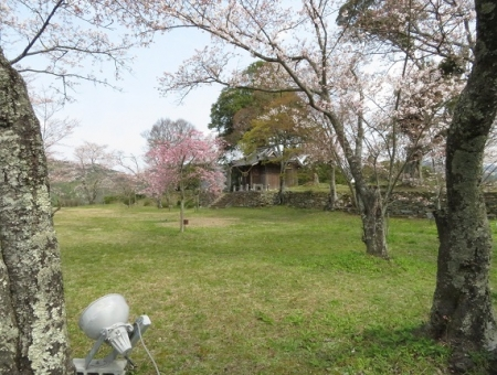 光明寺のしだれ桜 2019-03-29 126