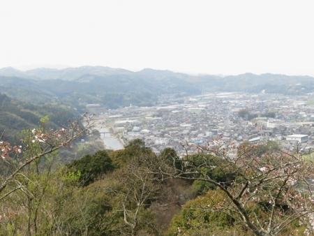 光明寺のしだれ桜 2019-03-29 130