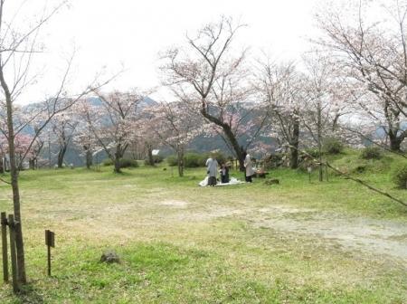 光明寺のしだれ桜 2019-03-29 144
